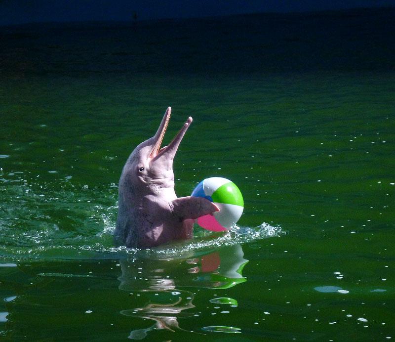 Дельфинарий в Тайланде