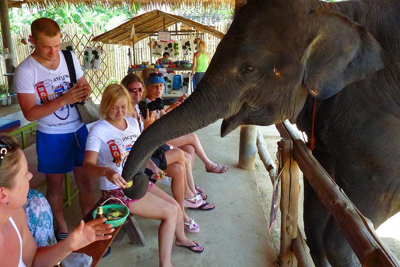 Слоны Тайланд