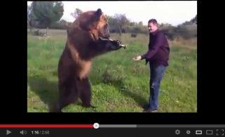 Такого медведя вы никогда не видели!