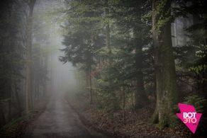 Туман в лесу