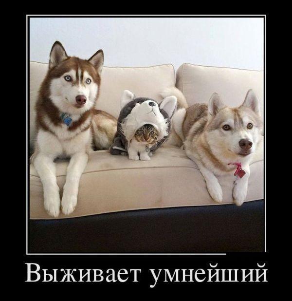smeshnie_kartinki_145528842191