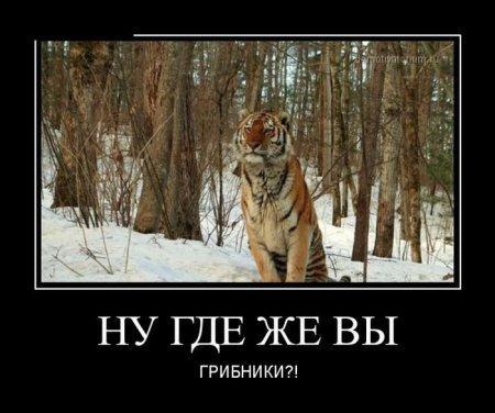 smeshnie_kartinki_145629835241