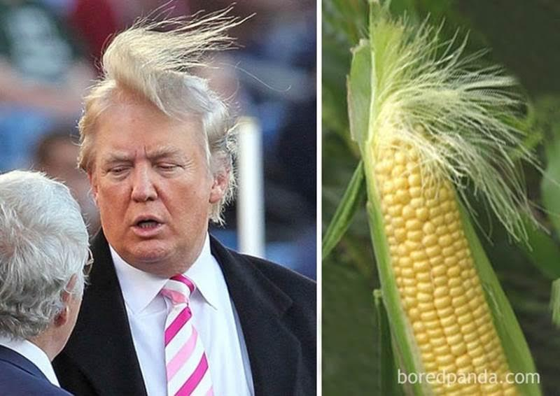 причёска Трампа и початок кукрузы