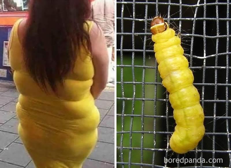 складки на платье женщины и гусеница