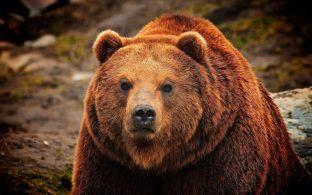 """Истории """"как я встретился с медведем"""""""