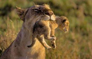 Мама является главным звеном в нашей жизни. Взгляните на эти милые фотографии.