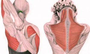 Упражнения для шеи: Освобождают от зажимов и нормализуют давление