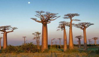 15 самых красивых деревьев нашей планеты
