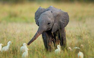 11 фото слоненков, которые заставят вас улыбнуться