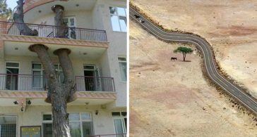 Фотографии, показывающие удивительные примеры уважения людей к природе