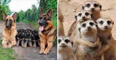 14 очаровательных семейных портретов животных