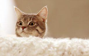 А вы знаете, что кошка является показателем благополучия?