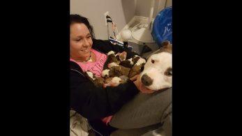 Женщина приютила брошенную беременную собаку. За свой благородный поступок она получила самую лучшую награду!