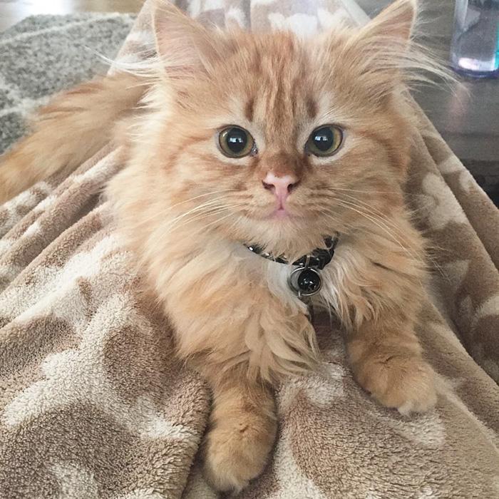 После того как котенка забрали из приюта, он все время улыбается