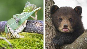 Удивительные фотографии очаровательных животных