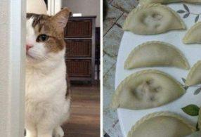 Снимки котов-хулиганов, которые веселят и удивляют