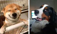 Животные — это чистая любовь! Такие фото поднимают настроение
