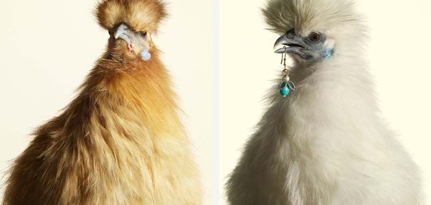 Нестандартные рекламные снимки от Питера Липпмана
