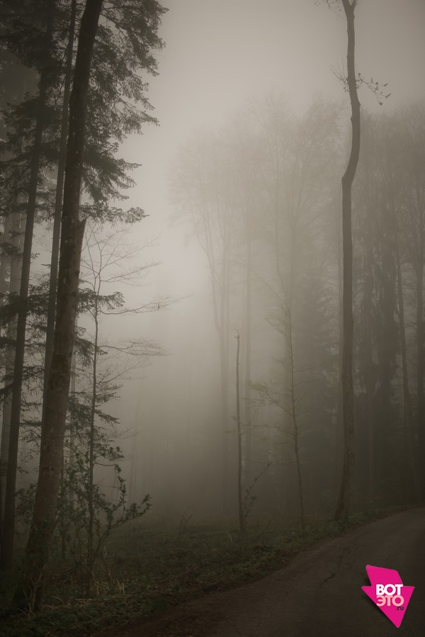 Фото тумана