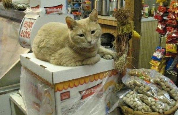 Кот, управляющий городом