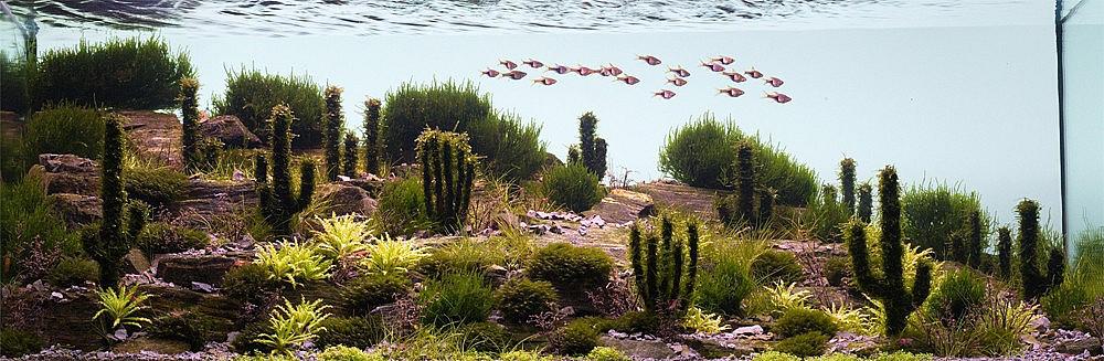Искусство аквариумистики – удивительные подводные пейзажи