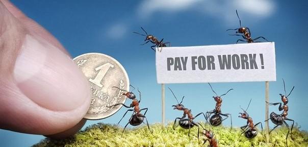 В мире муравьев